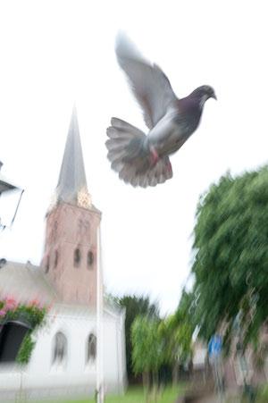 Duif+Pauluskerk